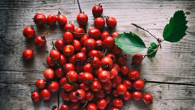 health benefits of Hawthorne