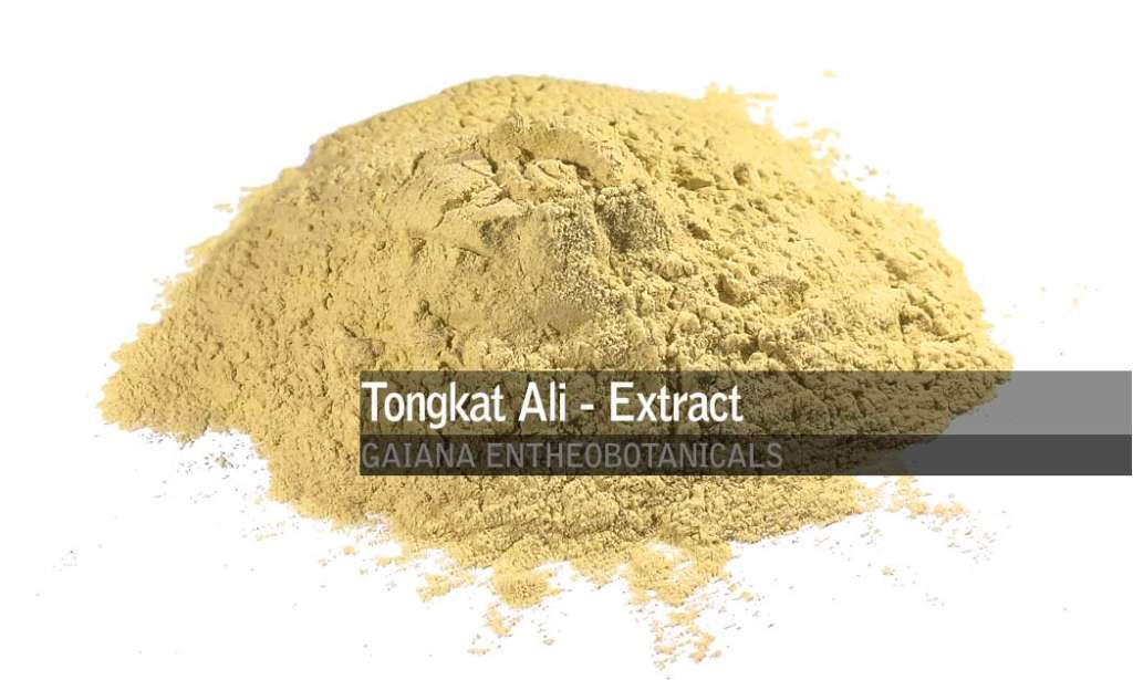 tongkat ali extracts powder